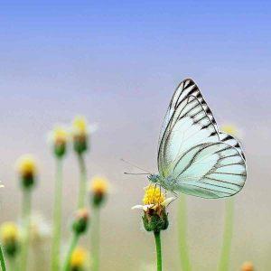 mariposas preciosas