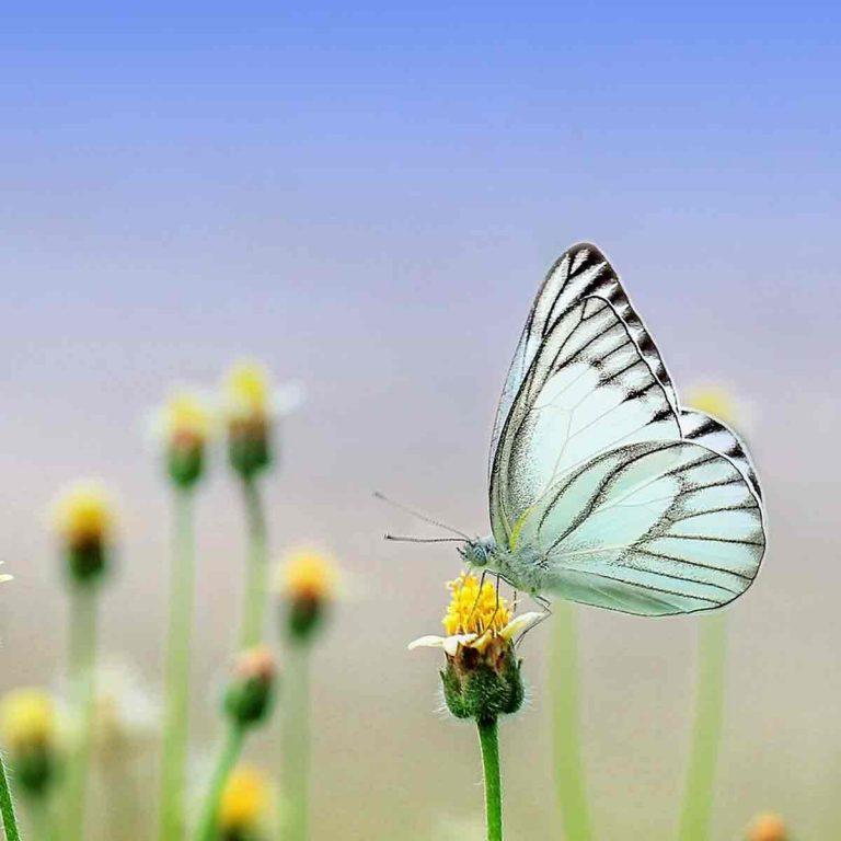 Mejores fotos de mariposas preciosas