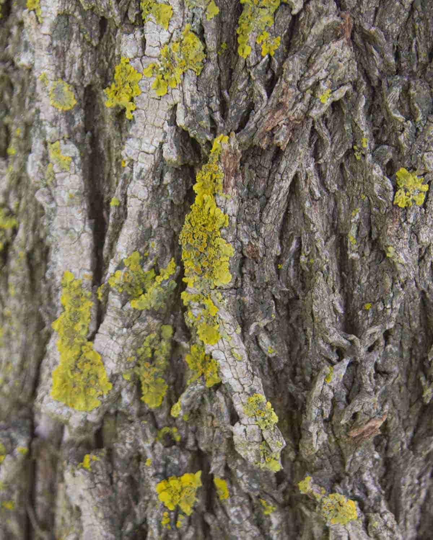 fotos de madera de pinos