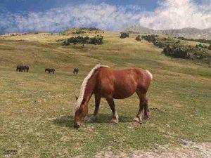 paisajes con caballos