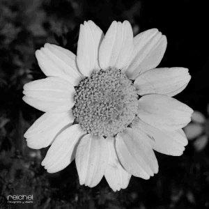 imagenes bonitas en blanco y negro