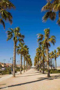 calles con palmeras