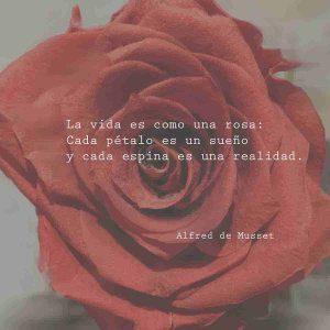 rosa roja con frases