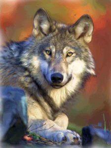 cuadros de lobos