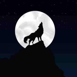 ilustracion lobo-con luna