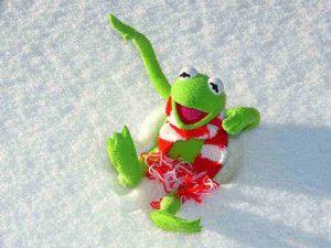 rana graciosa en la nieve