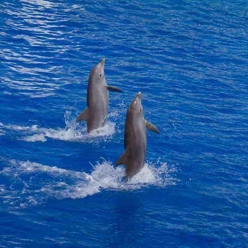 delfines bonitos