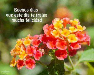flores con frases de buenos dias