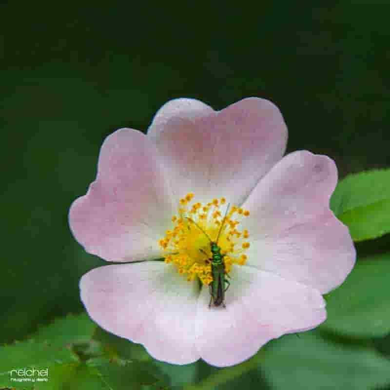 flores con insectos