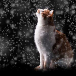 gato en la noche bonitas