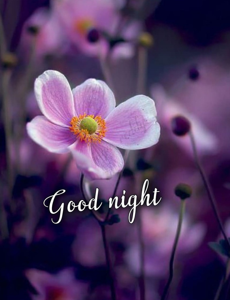 tarjetas de buenas noches con flores
